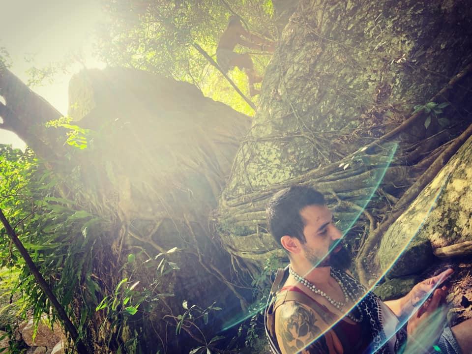 Sun beams catch the forest light